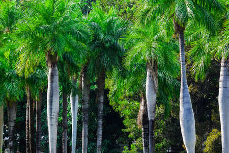 three palm trees: tropical forest on a sunny day