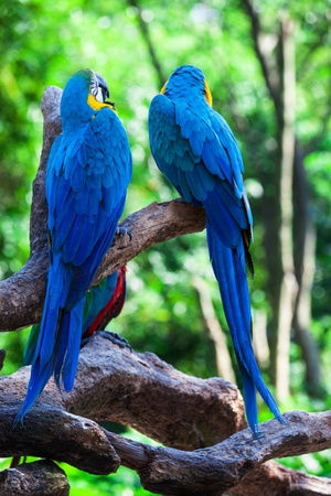 two of beautiful parrots in a tree photo