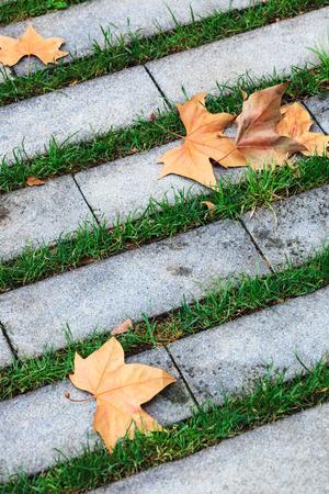 footway: maple leaves on the sidewalk in autumn