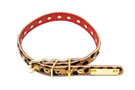 dog collar: beautiful fur dog collar on a white background