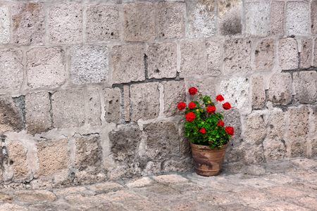 old stone wall: pot of geraniums on the stone wall background Stock Photo