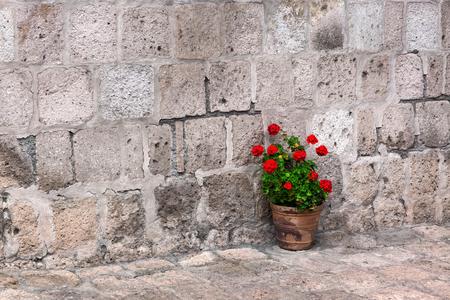 Topf mit Geranien auf der Steinmauer Hintergrund