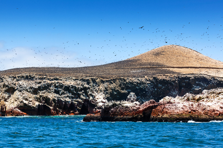 cormorants: colony of cormorants on the island