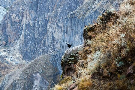 eagle canyon: soaring condors in the Andes Mountains Stock Photo