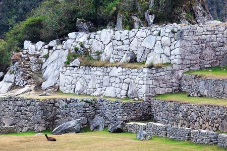 machu picchu: lama at the walls of Machu Picchu Stock Photo