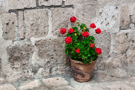 vase plaster: pot of geraniums on the stone wall background Stock Photo