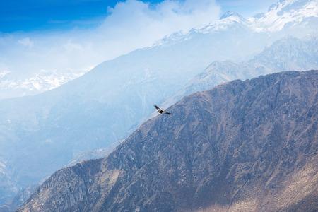 eagle canyon: condor soaring above the high mountains
