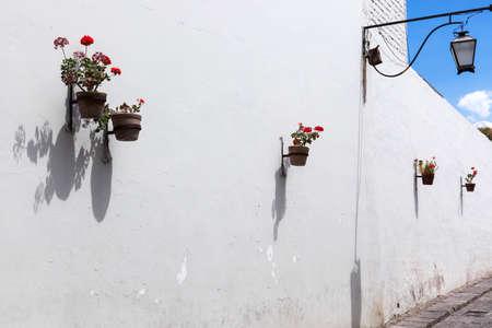 ollas de barro: geranios en macetas de arcilla en una pared blanca