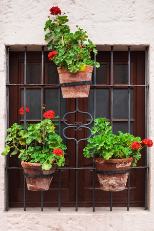 geraniums in pots on an old window Stock Photo