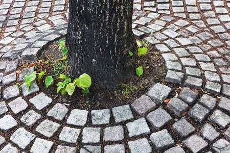 tree on sidewalk in the city Stock Photo