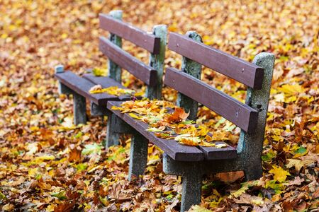 wooden benches in the fall in the park