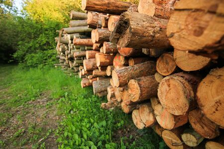 Forest pine and spruce trees. Log trunks pile, the logging timber wood industry. Stock Photo