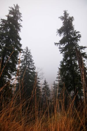 Autumn landscape in a foggy forest