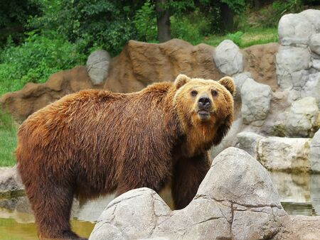 kamchatka: Orso Kamchatka