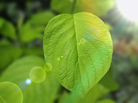 green leaf Stock Photo - 9787078