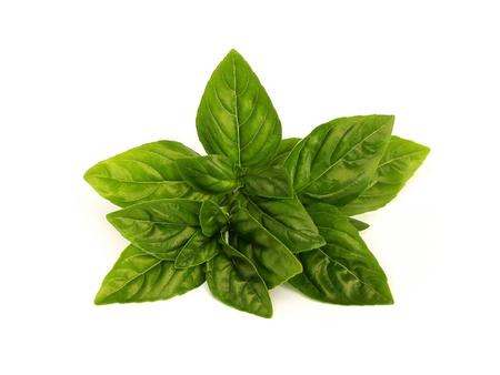 fresh basil Stock Photo - 9894565