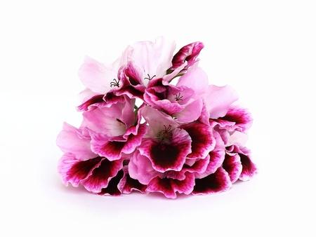 geranium Imagens - 9894563