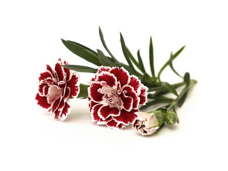 three carnations