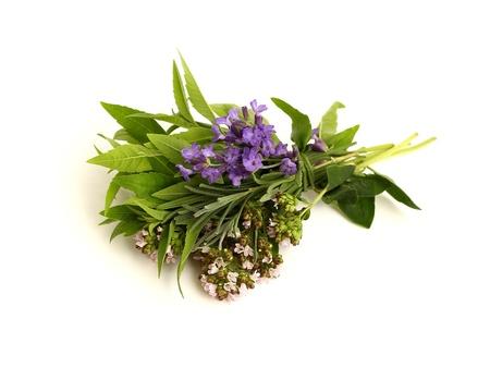 herbs Stock Photo - 9894606
