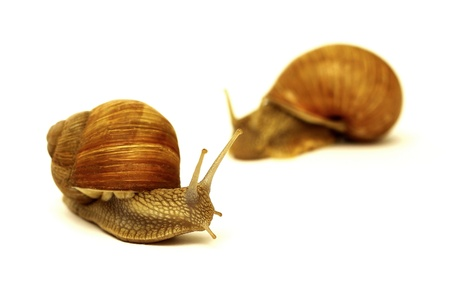 two snails Stock Photo - 10010625