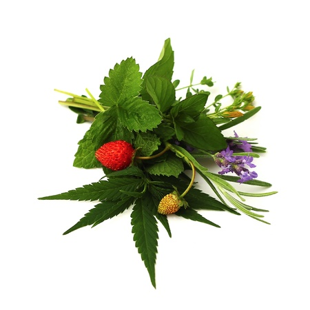 aromatherapy: bouquet of herbs