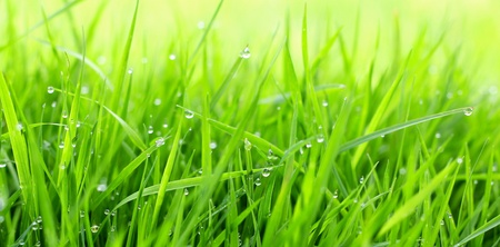 drops of dew on a green grass  Imagens