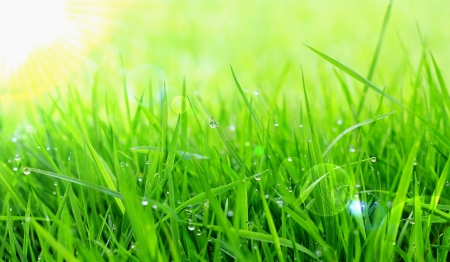 drops of dew on a green grass  写真素材
