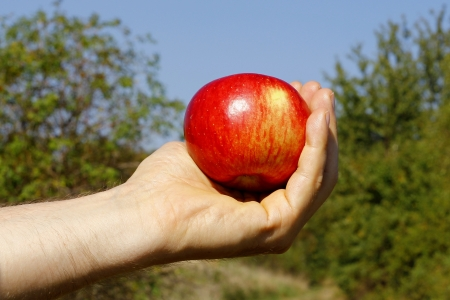 hand with an apple  photo