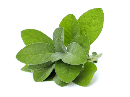 fresh sage on white background Imagens