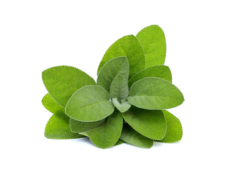 fresh sage on white background Stock Photo