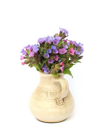 pulmonaria: lungwort in a vase on a white background