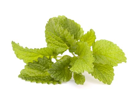 melissa: fresh melissa on white background