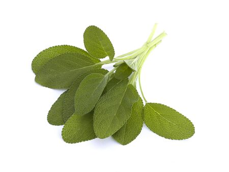 Fresh sage on a white background