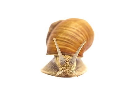 feelers: Snail on a white background Stock Photo