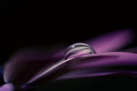 dewdrop: dewdrop on a purple flower