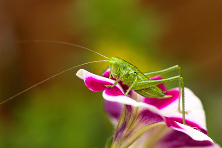 Green grasshopper on a flower Stock Photo