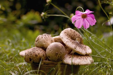 Edible mushrooms in a bowl