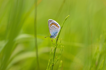 Beautiful butterfly on a meadow Stock Photo