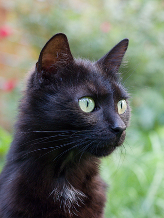 black cat sitting in the grass in the summer