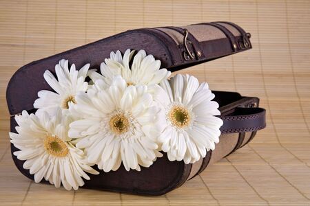 Lovely bouquet of white Gerber daisies in old style suitcase sitting on bamboo mat. Stock Photo