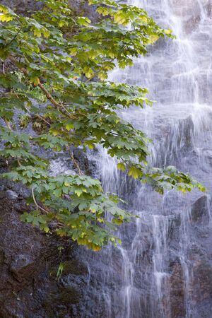 Lovely alpine waterfall provides background for leafy tree branches.