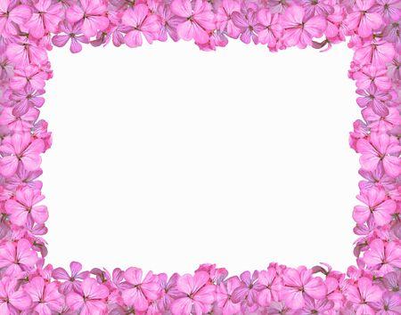 notecard: Floral Frame - Pink