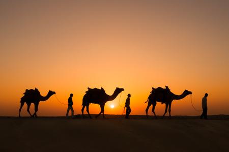 animales del desierto: Jaisalmer, India - noviembre 15,2008: silueta de la población local y camellos al atardecer en noviembre 15,2008 en el desierto de Thar, cerca de Jaisalmer, Rajasthan, India.