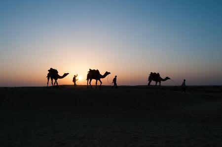 jaisalmer: JAISALMER, INDIA - NOVEMBER 15,2008: Silhouette of unidentified local people and camels at sunset on November 15,2008 in Thar desert near Jaisalmer, Rajasthan, India.