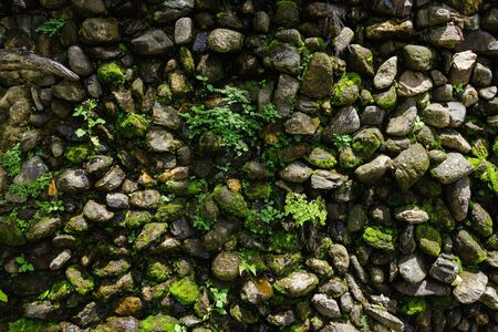 humid: Ferns and mosses grow on a humid rock wall in a garden. Stock Photo