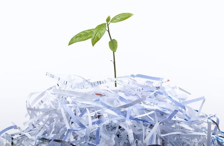 shredded paper: New Life concept with recycle - white background