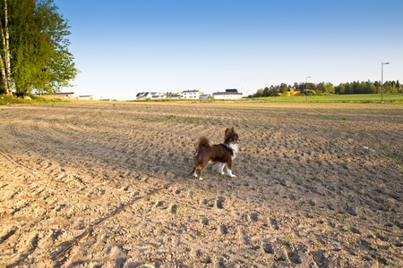 ploughed field and dog Stock Photo