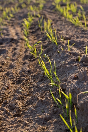 ploughed: ploughed field Stock Photo