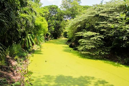 green river: Green river Stock Photo