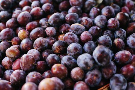 Macro Photo food fruit plums. Texture background of fresh blue plums. Image fruit product blue plums Reklamní fotografie - 132124911